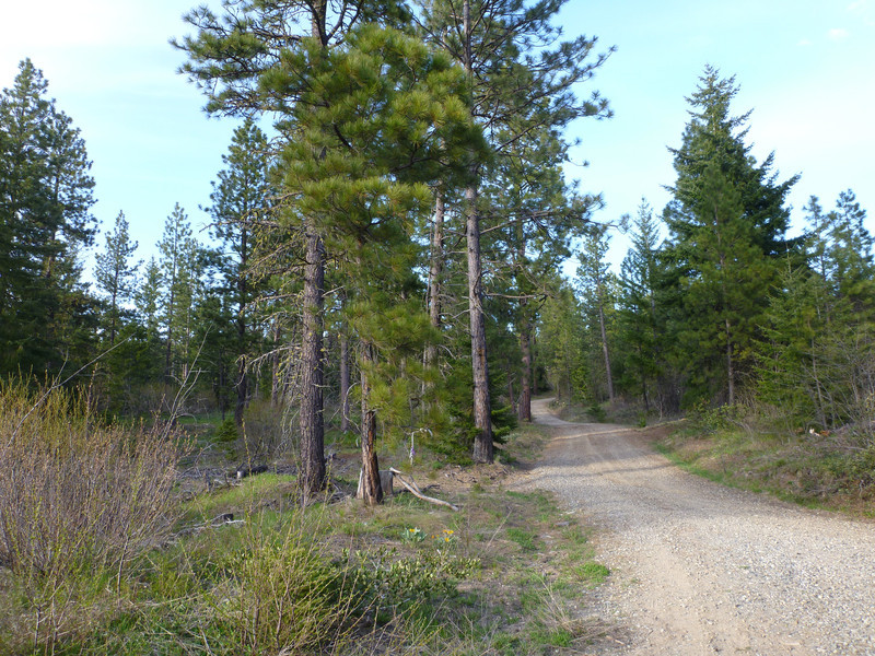 I think we took a trail to the left here.  The area was crisscrossed with trails and dirt roads.