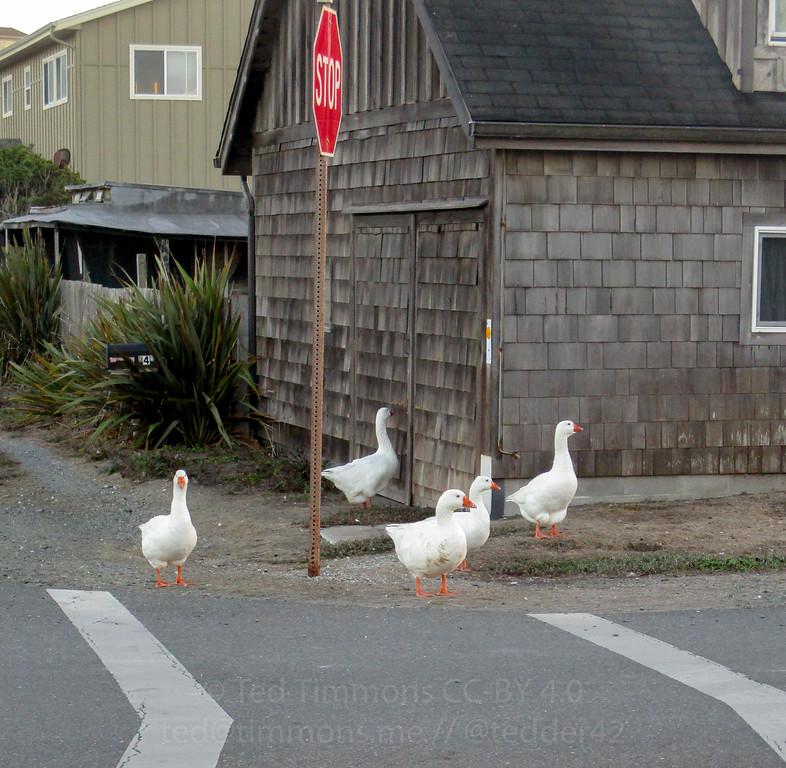 Geese. Quick, damn it.