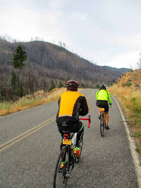 Riding along Cow Creek Road into the 2013 Douglas Complex Fire area.