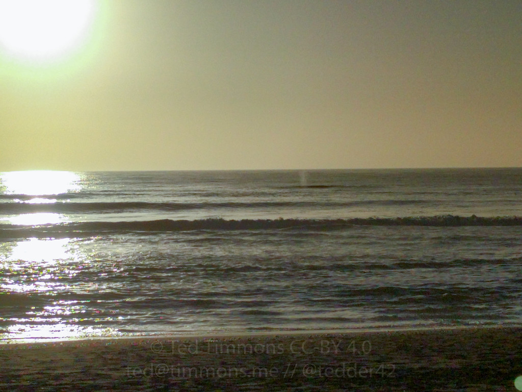 A whale at sunet on Gold Beach! You can see its spout.