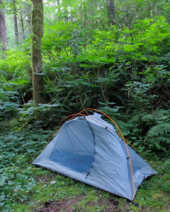 My tent site. Tucked away in the woods on nice soft ground.