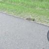 "June 15th 2016<br /> Tortoise Building Its' Nest <br /> <a href=""https://youtu.be/an227JSgwKw"">https://youtu.be/an227JSgwKw</a><br /> <br /> <a href=""https://salphotobiz.smugmug.com/Animals/Wildlife-around/i-zRvmJPV"">https://salphotobiz.smugmug.com/Animals/Wildlife-around/i-zRvmJPV</a>"