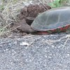"""<a href=""""http://www.diffen.com/difference/Tortoise_vs_Turtle"""">http://www.diffen.com/difference/Tortoise_vs_Turtle</a>"""