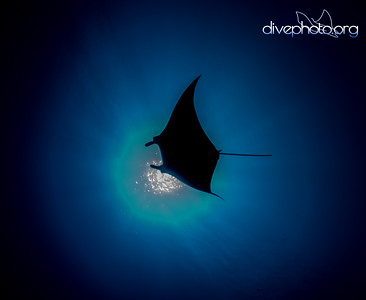 Manta in South China Sea