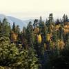 Fall near Big Bear Lake