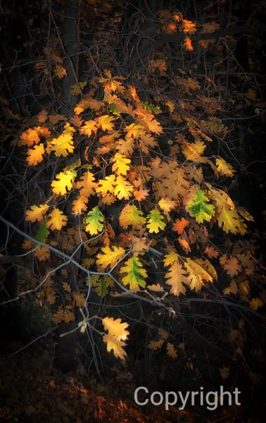Fall at Big Bear Keller Peak