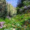 San Gorgonio Wilderness Trail
