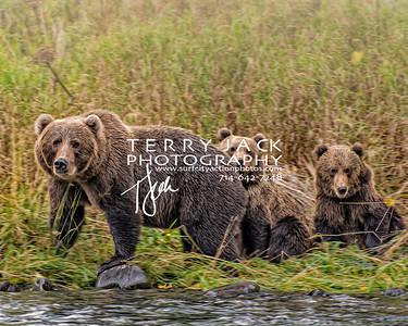 Alaska-298c