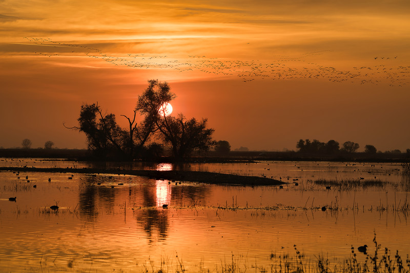 Sunset over Wetland