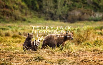 Alaska-378 copy