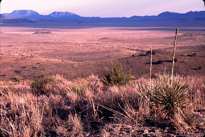 This is the Chihuhuan Desert.  It looks desolate but it is really teeming with life.