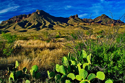 Chisos Mountains & Prickly Pear Cactus
