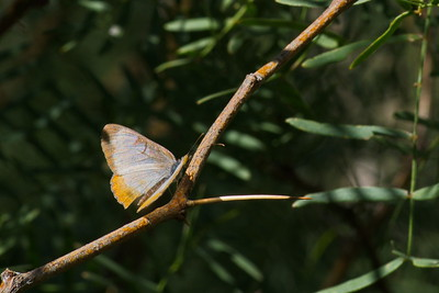Big_Bend_NP_11-2015_butterfly_RAW_2706