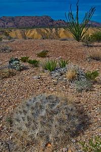 Maverick Badlands and Cactus