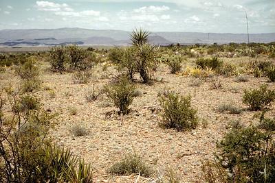 Merriami Plot, Big Bend National Park, TX, 1960