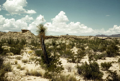 Eremicus Plot, Big Bend National Park, TX, 1960