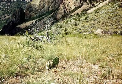 Sigmodon Plot, Green Gulch, Big Bend National Park, TX, 1960