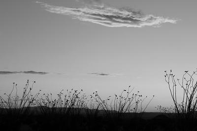 Ocotillo field from 118
