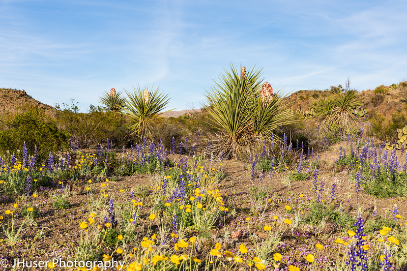Wildflowers in the Desert