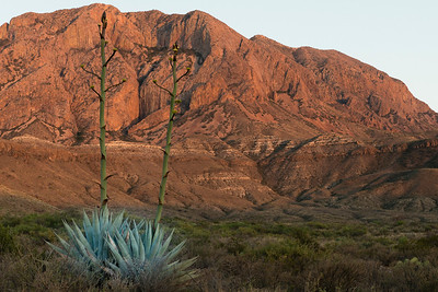 Cat Tail Falls road. Sunset against the Chisos Mountains.