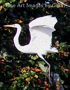 Egret Take Off Facebook