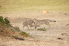 Cheetah_Cubs_Mara_Kenya_Asilia_20150175