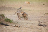 Cheetah_Cubs_Mara_Kenya_Asilia_20150133