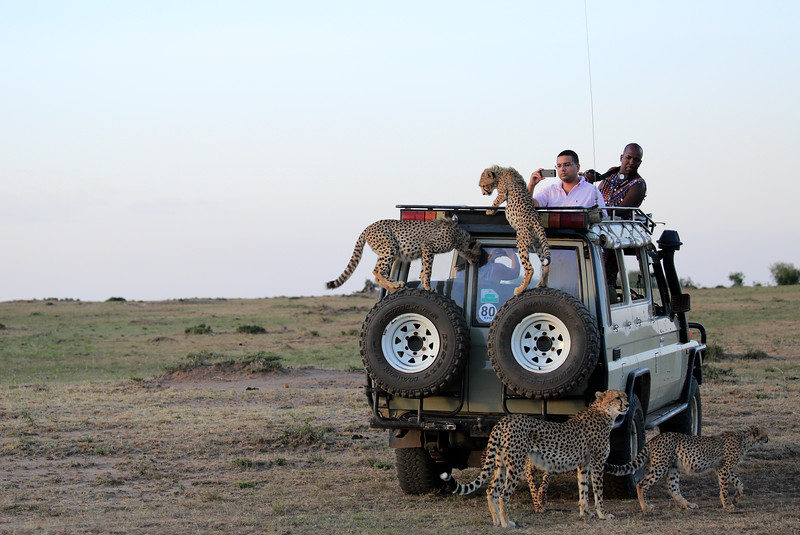 Cheetah_Family_Vehicle_Mara_Kenya_Asilia_20150012