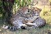 Cheetah_Cubs_Mara_Kenya_Asilia_20150092
