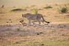 Cheetah_Cubs_Mara_Kenya_Asilia_20150109
