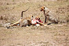 Cheetah_Feast_Mara_Kenya_Asilia_20150130