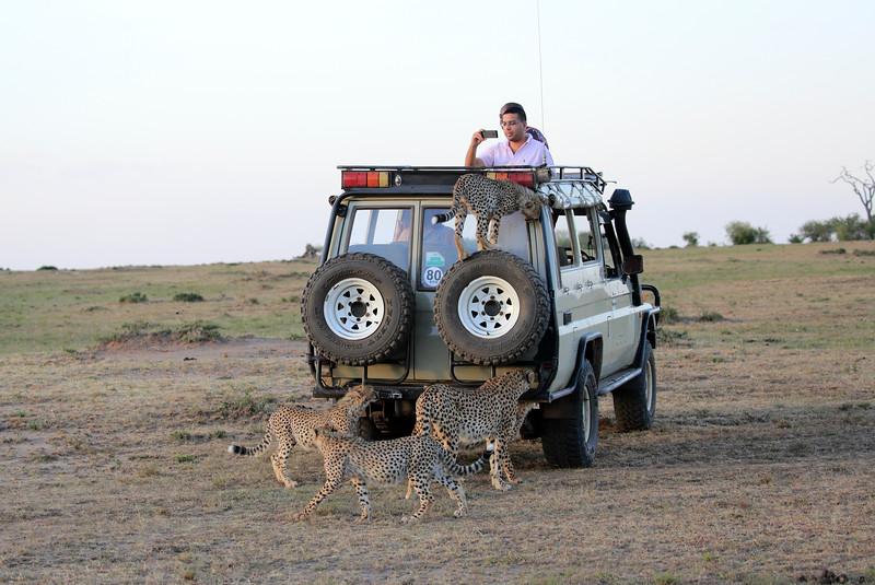 Cheetah_Family_Vehicle_Mara_Kenya_Asilia_20150004