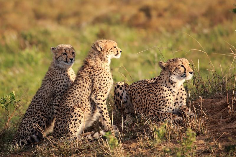 Cheetah_Adventure_Phinda_2016_0026