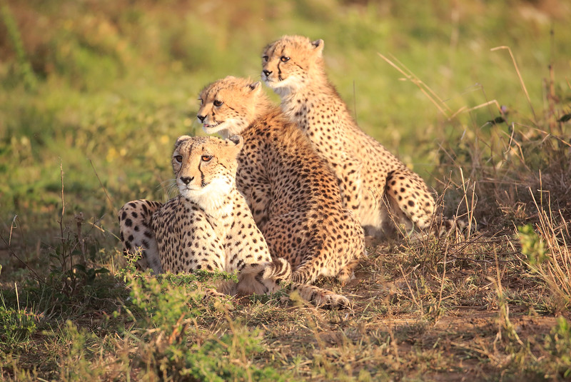 Cheetah_Adventure_Phinda_2016_0061