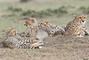 Cheetah_Family_Portraits_Mara_Kenya_Asilia_20150050