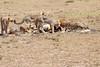 Cheetah_Feast_Mara_Kenya_Asilia_20150066