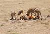 Cheetah_Feast_Mara_Kenya_Asilia_20150053