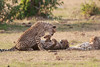 Cheetah_Cubs_Mara_Kenya_Asilia_20150207
