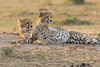 Cheetah_Cubs_Mara_Kenya_Asilia_20150253