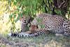 Cheetah_Cubs_Mara_Kenya_Asilia_20150040