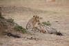 Cheetah_Cubs_Mara_Kenya_Asilia_20150123