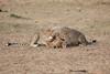 Cheetah_Cubs_Mara_Kenya_Asilia_20150150