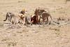 Cheetah_Feast_Mara_Kenya_Asilia_20150054