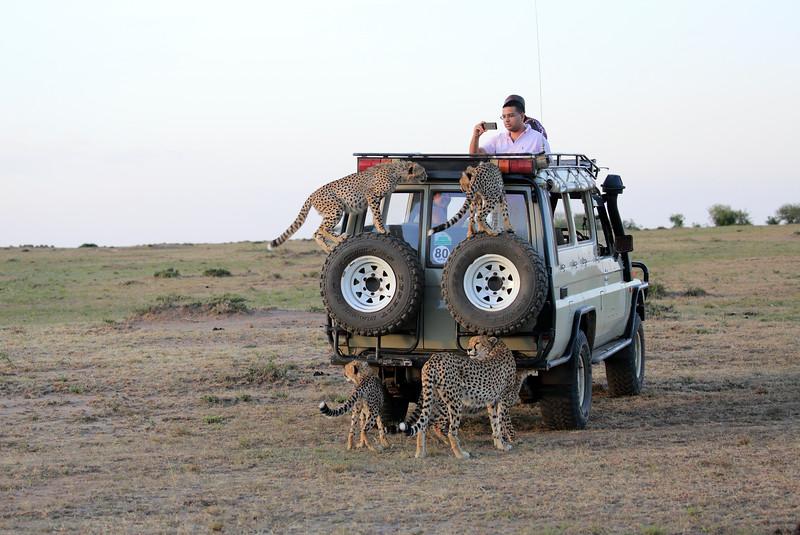 Cheetah_Family_Vehicle_Mara_Kenya_Asilia_20150007