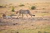 Cheetah_Cubs_Mara_Kenya_Asilia_20150106