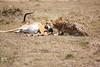 Cheetah_Feast_Mara_Kenya_Asilia_20150198
