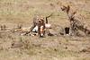 Cheetah_Feast_Mara_Kenya_Asilia_20150091