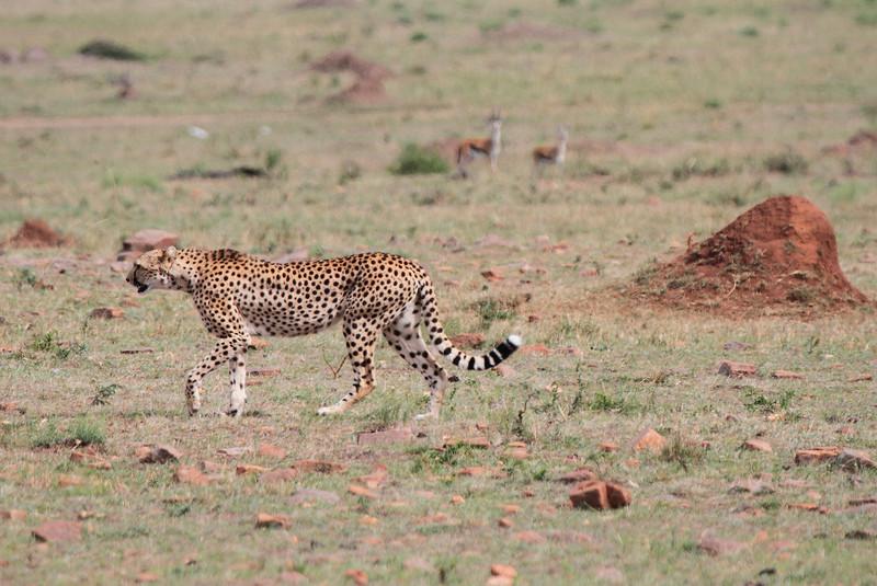 Cheetah Topi House Mara
