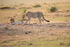 Cheetah_Cubs_Mara_Kenya_Asilia_20150107