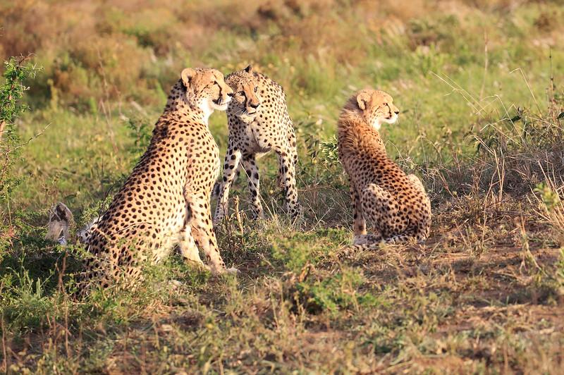 Cheetah_Adventure_Phinda_2016_0069